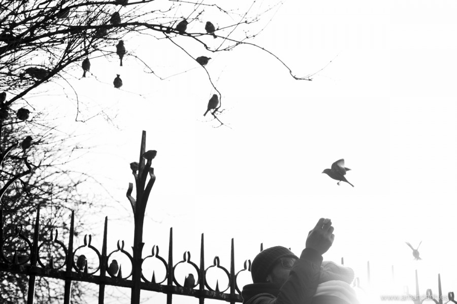 birds in notre dame