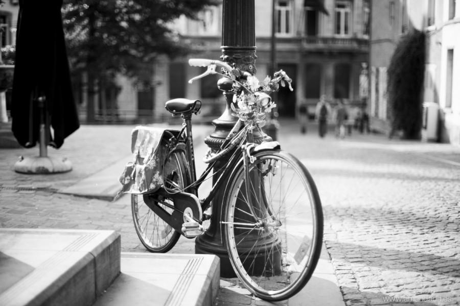 belgica-5946