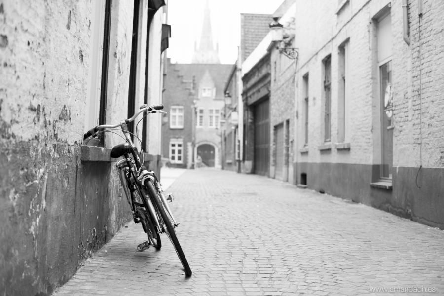 belgica-5971