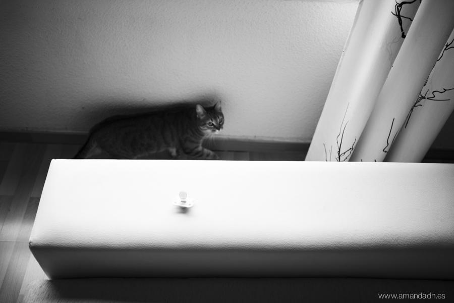 fotografia gato