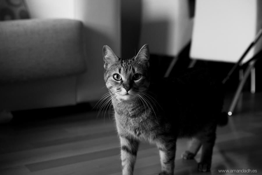fotografia gatos castellon