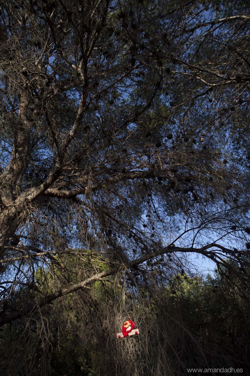 el bosque bocetos-9483