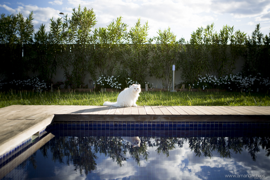 gato y piscina en preboda