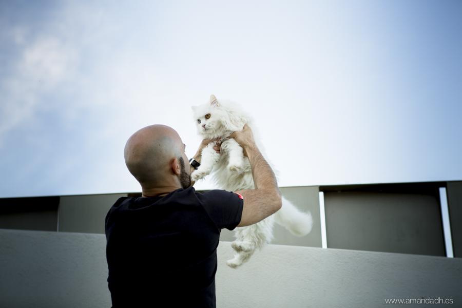 preboda con gatito